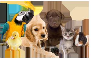 домашние животные для наших детей